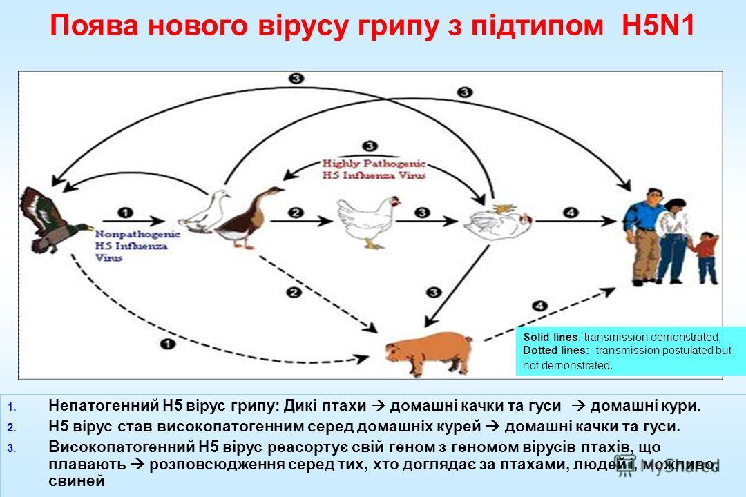 1. Непатогенний H5 вірус гриппппппппппппу: Дикі птахи домашні качки та гуси домашні кури. 2. H5 вірус став високопатогенним серед домашніх курей домашні качки та гуси. 3. Високопатогенний H5 вірус реасортує свій геном з геномом вірусів птахів, що пла