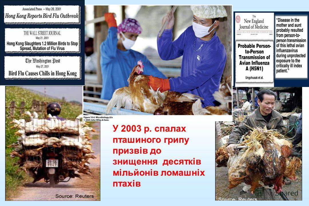 У 2003 р. спалах пташиного гриппппппппппппу призвів до знищення десятків мільйонів ломашніх птахів