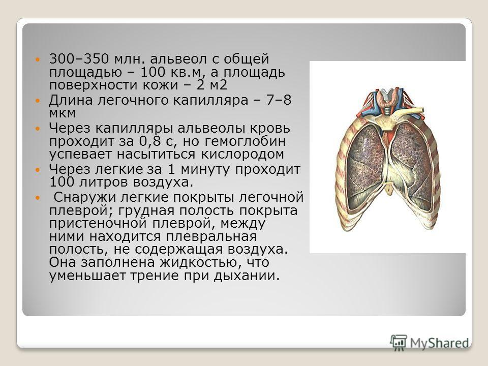 300–350 млн. альвеол с общей площадью – 100 кв.м, а площадь поверхности кожи – 2 м 2 Длина легочного капилляра – 7–8 мкм Через капилляры альвеолы кровь проходит за 0,8 с, но гемоглобин успевает насытиться кислородом Через легкие за 1 минуту проходит