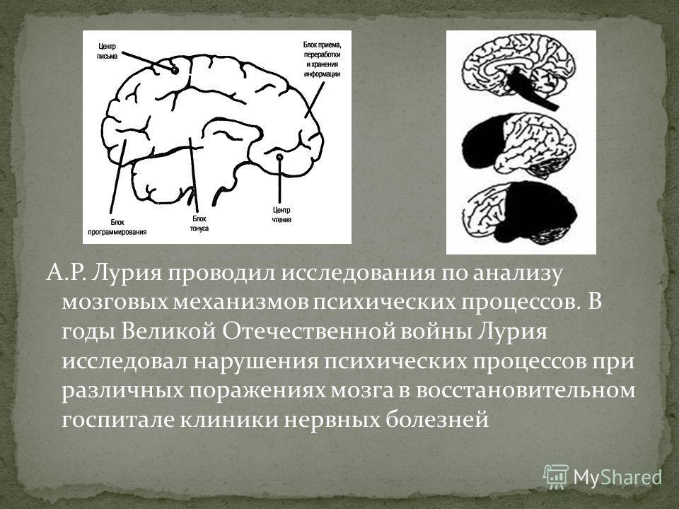 А.Р. Лурия проводил исследования по анализу мозговых механизмов психических процессов. В годы Великой Отечественной войны Лурия исследовал нарушения психических процессов при различных поражениях мозга в восстановительном госпитале клиники нервных бо