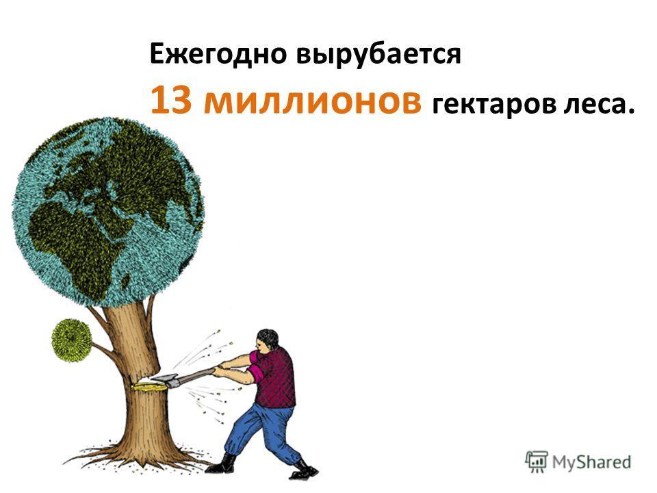 Ежегодно вырубается 13 миллионов гектаров леса.