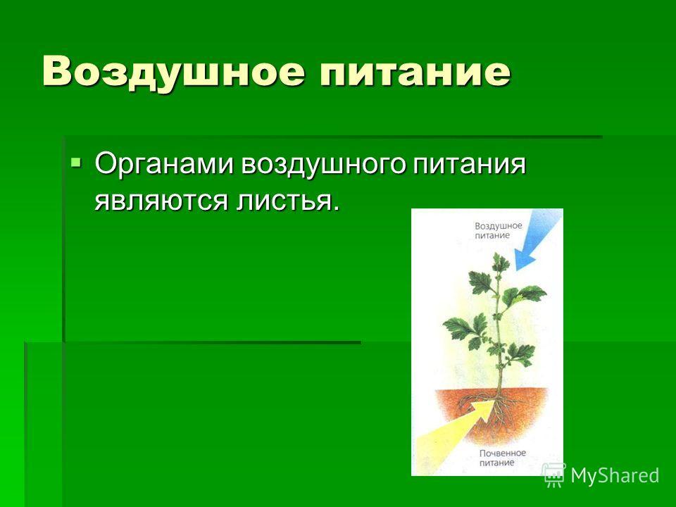 Воздушное питание Органами воздушного питания являются листья. Органами воздушного питания являются листья.