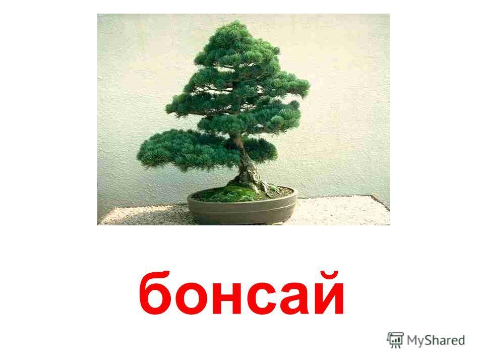 кімнатні рослини (декоративнолистяні)