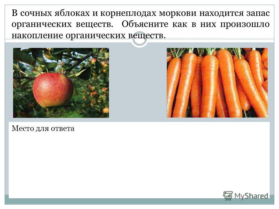 В сочных яблоках и корнеплодах моркови находится запас органических веществ. Объясните как в них произошло накопление органических веществ. Место для ответа
