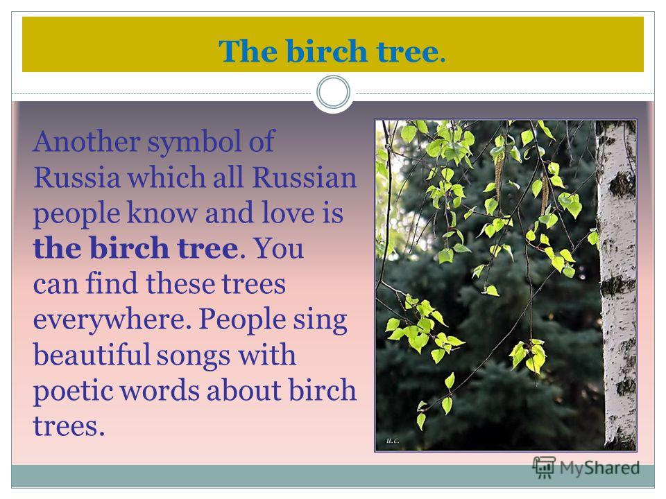 The birch tree. Another symbol of Russia which all Russian people know and love is the birch tree. You can find these trees everywhere. People sing beautiful songs with poetic words about birch trees.