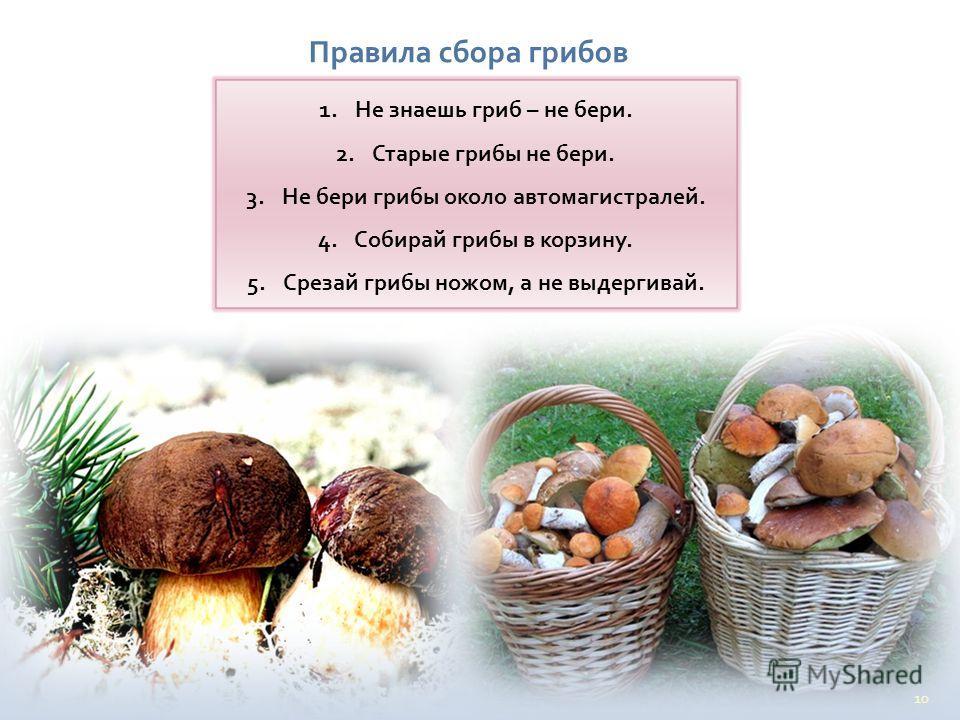 10 Правила сбора грибов 1. Не знаешь гриб – не бери. 2. Старые грибы не бери. 3. Не бери грибы около автомагистралей. 4. Собирай грибы в корзину. 5. Срезай грибы ножом, а не выдергивай.