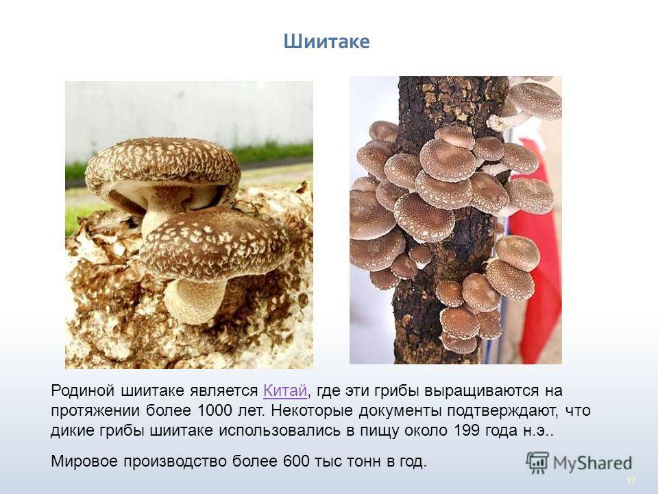 17 Родиной шиитаке является Китай, где эти грибы выращиваются на протяжении более 1000 лет. Некоторые документы подтверждают, что дикие грибы шиитаке использовались в пищу около 199 года н.э..Китай Мировое производство более 600 тыс тонн в год. Шиита