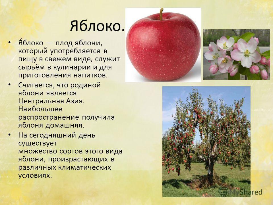 Яяблоко. Я́яблоко плод яблони, который употребляется в пищу в свежем виде, служит сырьём в кулинарии и для приготовления напитков. Считается, что родиной яблони является Центральная Азия. Наибольшее распространение получила яблоня домашняя. На сегодн