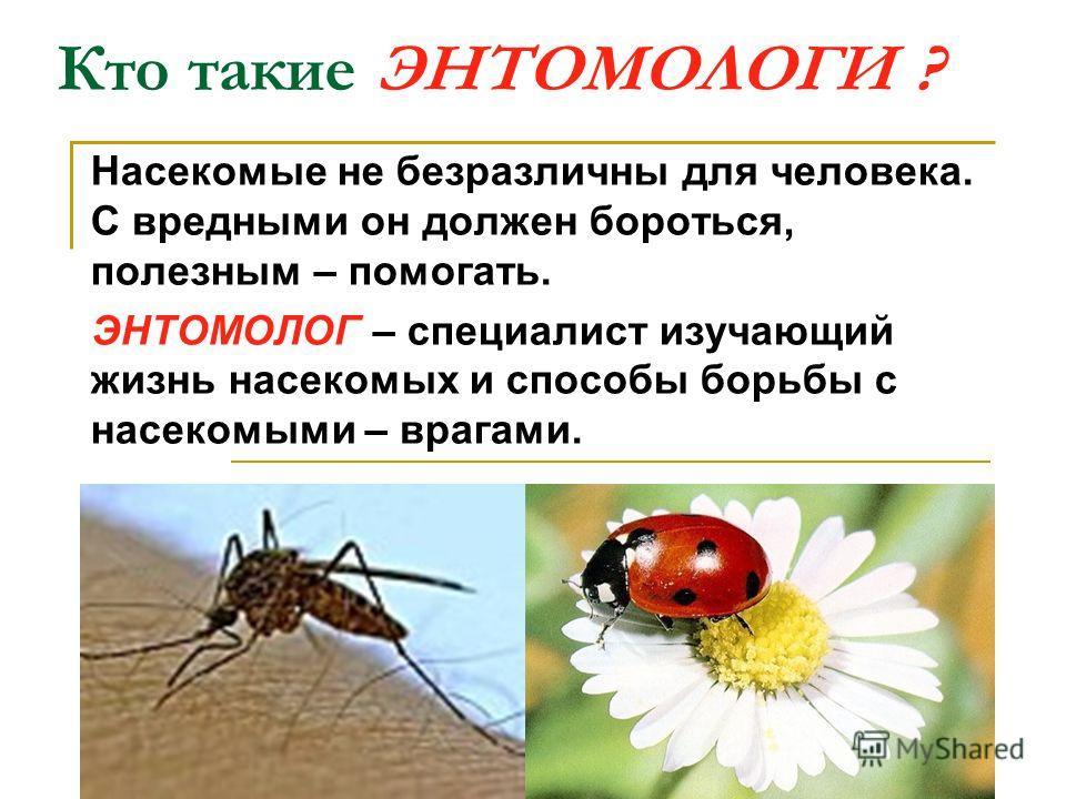 Кто такие ЭНТОМОЛОГИ ? Насекомые не безразличны для человека. С вредными он должен бороться, полезным – помогать. ЭНТОМОЛОГ – специалист изучающий жизнь насекомых и способы борьбы с насекомыми – врагами.