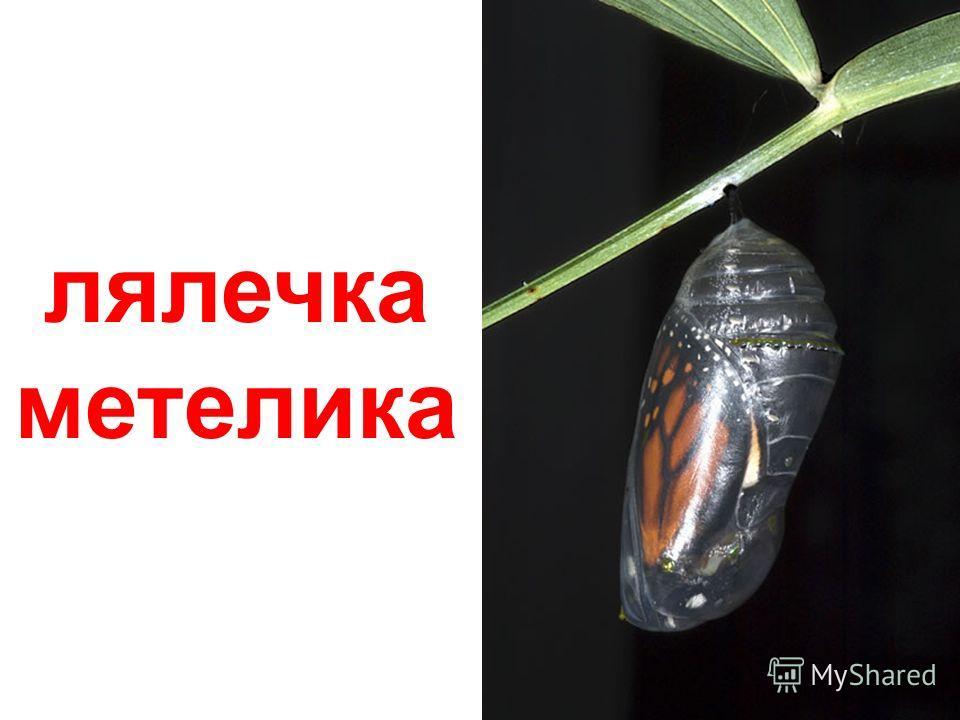 комахи ( металлики )