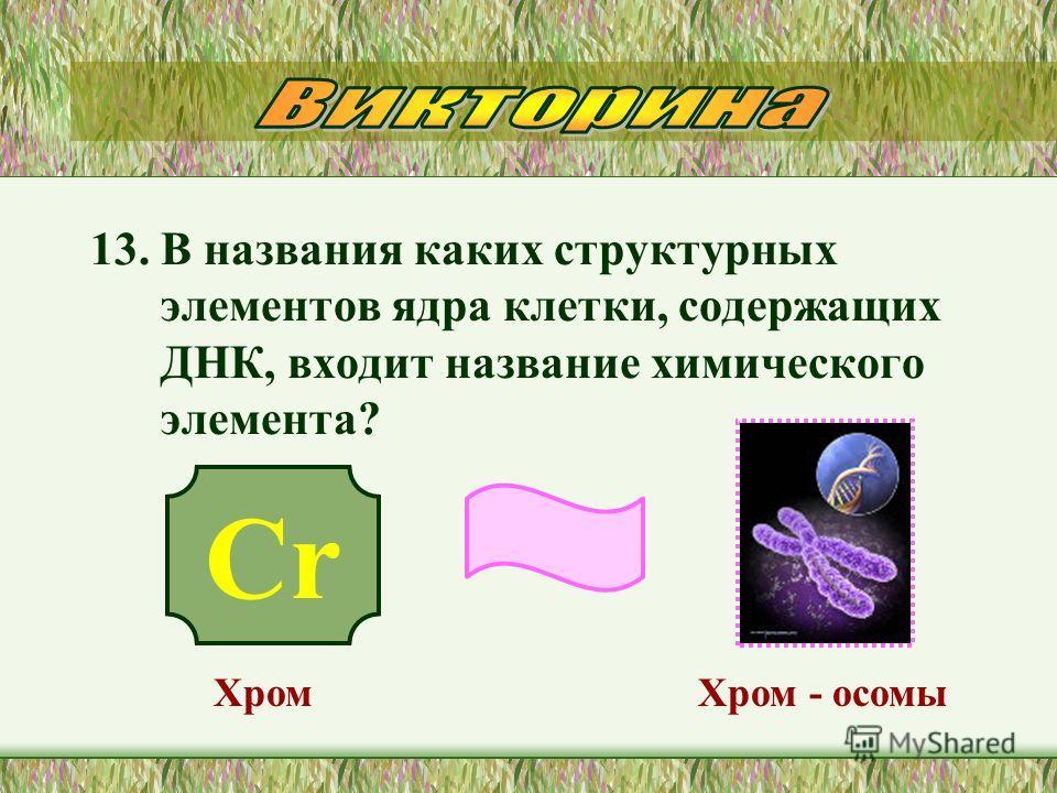 13. В названия каких структурных элементов ядра клетки, содержащих ДНК, входит название химического элемента? Хром - осомы Cr Хром