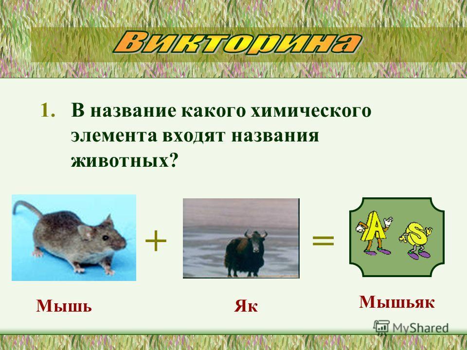 1. В название какого химического элемента входят названия животных? += Мышьяк Мышь Як