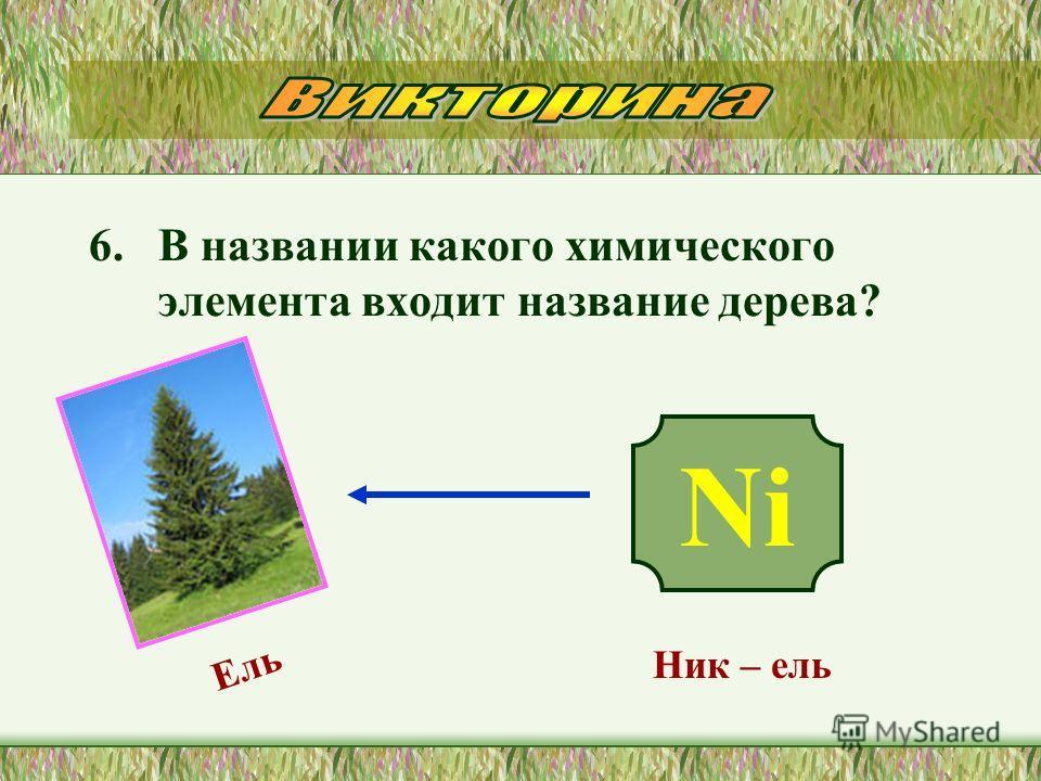 6. В названии какого химического элемента входит название дерева? Ni Ник – ель Ель