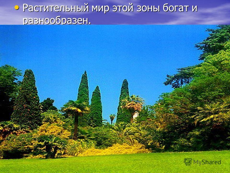 Растительный мир этой зоны богат и разнообразен. Растительный мир этой зоны богат и разнообразен.