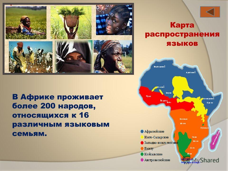 В Африке проживает более 200 народов, относящихся к 16 различным языковым семьям. Карта распространения языков