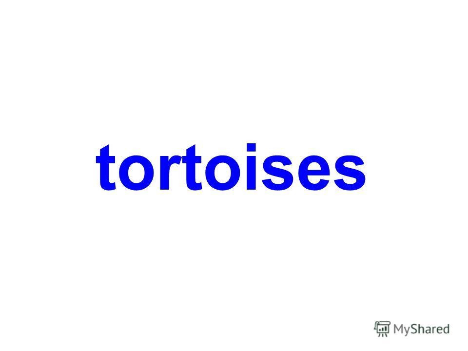 tortoises and lizards