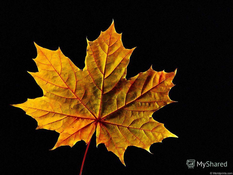 жёлтый лист