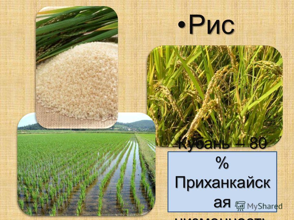 Рис Рис Кубань – 80 % Приханкайск ая низменность