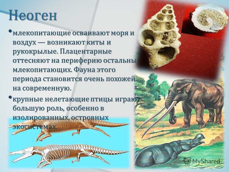 Неоген млекопитающие осваивают моря и воздух возникают киты и рукокрылые. Плацентарные оттесняют на периферию остальных млекопитающих. Фауна этого периода становится очень похожей на современную. млекопитающие осваивают моря и воздух возникают киты и