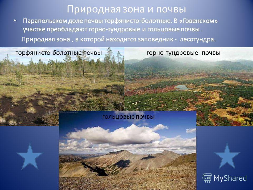 Природная зона и почвы Парапольском доле почвы торфянисто-болотные. В «Говенском» участке преобладают горно-тундровые и гольцовые почвы. Природная зона, в которой находится заповедник - лесотундра. торфянисто-болотные почвы горно-тундровые почвы голь