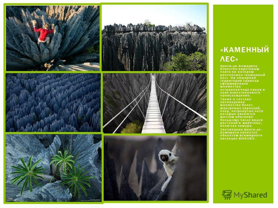 Цинги-де-Бемараха известен карстовым плато на котором расположен «каменный лес». На обширной территории природа сформировала множество остроконечных пиков и скал известнякового происхождения. Также в составе заповедника множество болот, мангровых зар
