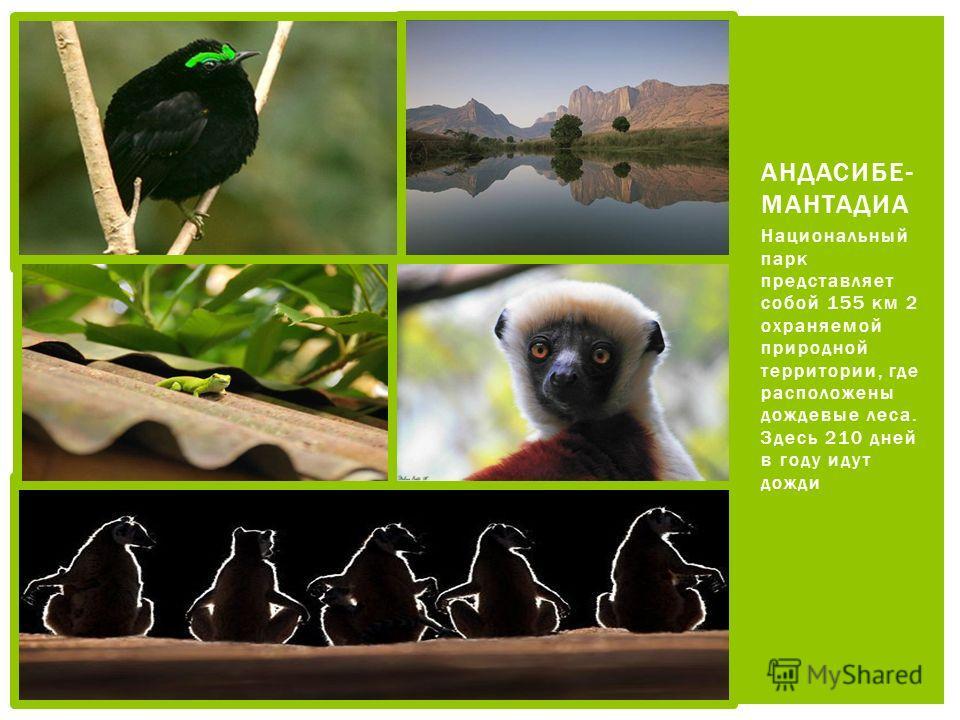 Национальный парк представляет собой 155 км 2 охраняемой природной территории, где расположены дождевые леса. Здесь 210 дней в году идут дожди АНДАСИБЕ- МАНТАДИА