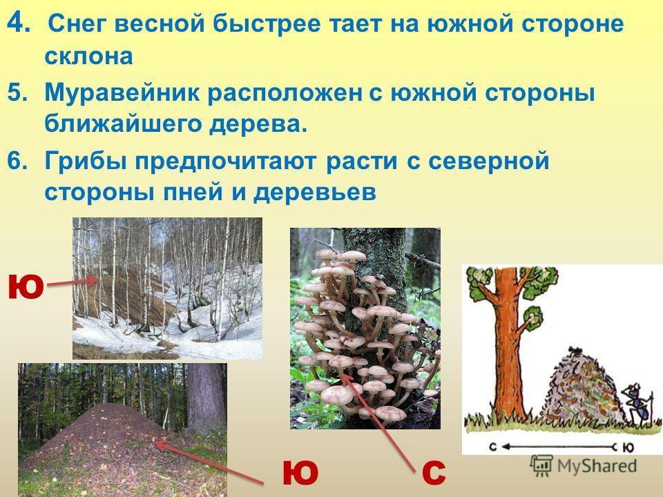 4. Снег весной быстрее тает на южной стороне склона 5. Муравейник расположен с южной стороны ближайшего дерева. 6. Грибы предпочитают расти с северной стороны пней и деревьев СЮ Ю