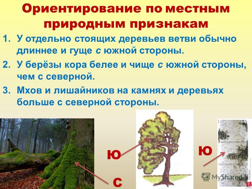 Ориентирование по местным природным признакам 1. У отдельно стоящих деревьев ветви обычно длиннее и гуще с южной стороны. 2. У берёзы кора белее и чище с южной стороны, чем с северной. 3. Мхов и лишайников на камнях и деревьях больше с северной сторо