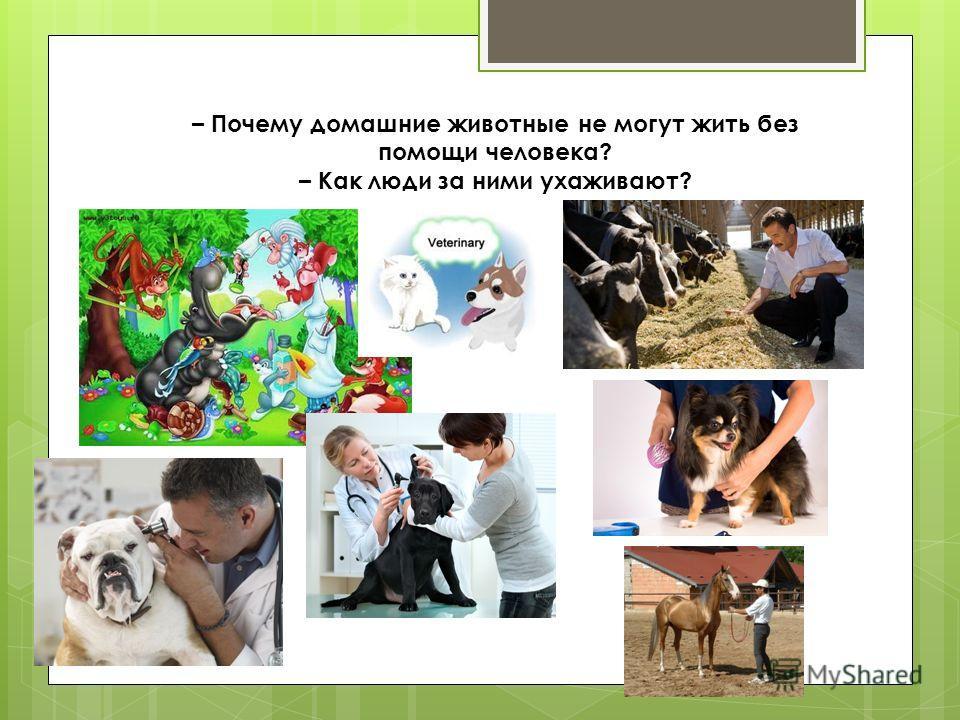 – Почему домашние животные не могут жить без помощи человека? – Как люди за ними ухаживают?