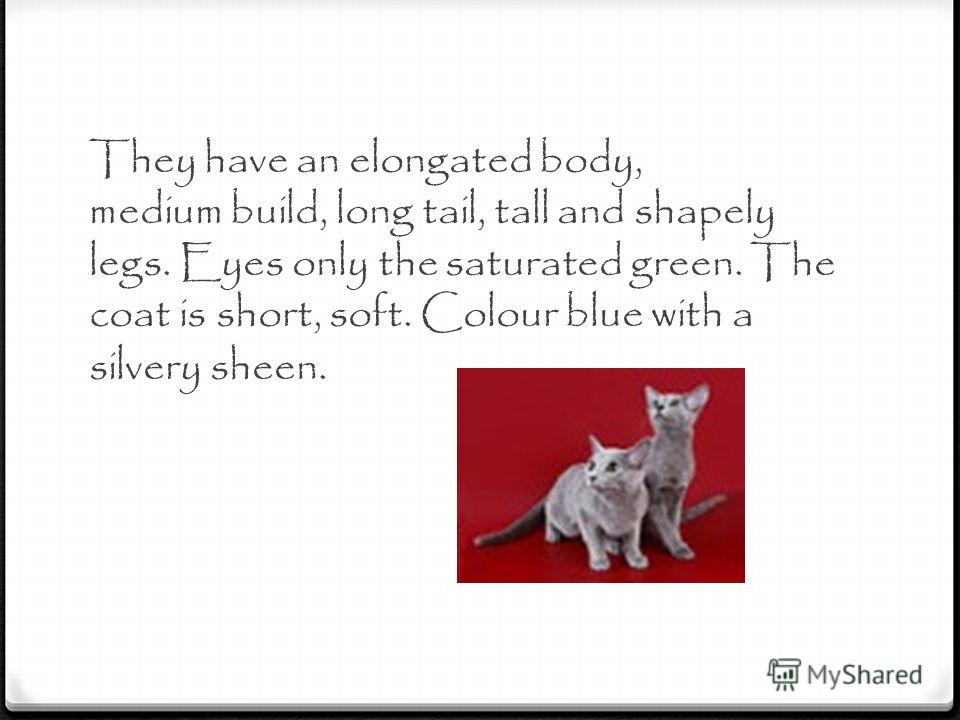 They have an elongated body, medium build, long tail, tall and shapely legs. Eyes only the saturated green. The coat is short, soft. Colour blue with a silvery sheen.