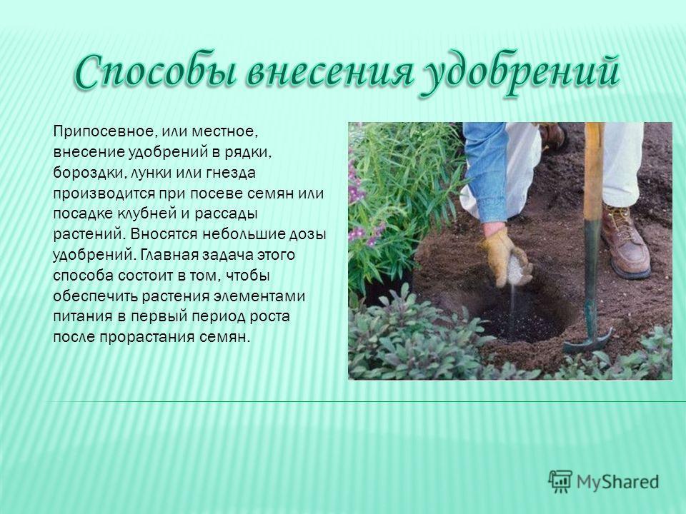Припосевное, или местное, внесение удобрений в рядки, бороздки, лунки или гнезда производится при посеве семян или посадке клубней и рассады растений. Вносятся небольшие дозы удобрений. Главная задача этого способа состоит в том, чтобы обеспечить рас