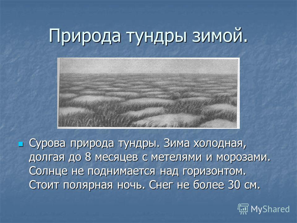Природа тундры зимой. Сурова природа тундры. Зима холодная, долгая до 8 месяцев с метелями и морозами. Солнце не поднимается над горизонтом. Стоит полярная ночь. Снег не более 30 см. Сурова природа тундры. Зима холодная, долгая до 8 месяцев с метелям