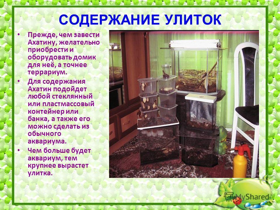 Уход и содержание виноградных улиток в домашних условиях