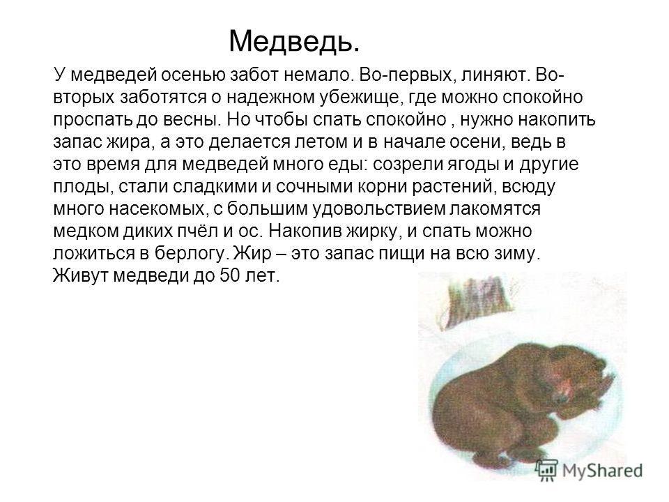 Медведь. У медведей осенью забот немало. Во-первых, линяют. Во- вторых заботятся о надежном убежище, где можно спокойно проспать до весны. Но чтобы спать спокойно, нужно накопить запас жира, а это делается летом и в начале осени, ведь в это время для