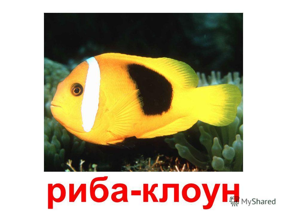 морська рыба