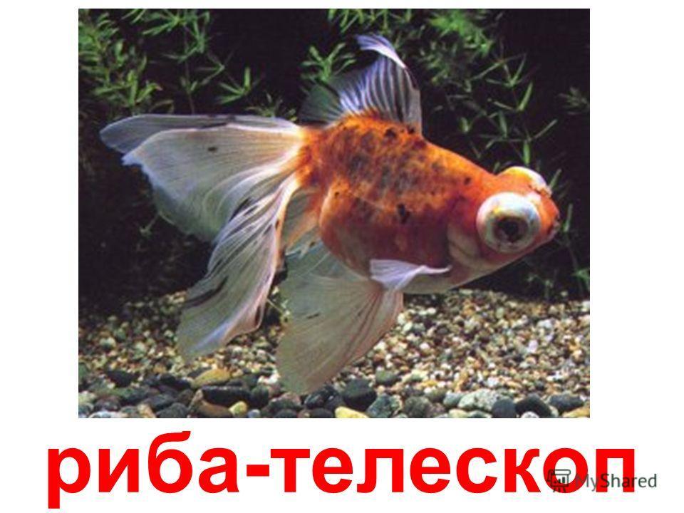 рыба-місяць