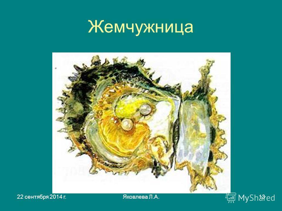 22 сентября 2014 г.Яковлева Л.А.13 Жемчужница