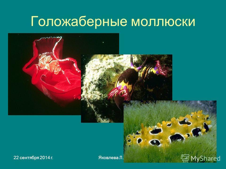 22 сентября 2014 г.Яковлева Л.А.3 Голожаберные моллюски