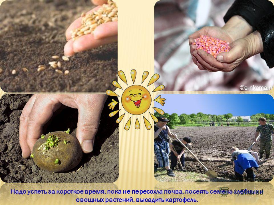 Надо успеть за короткое время, пока не пересохла почва, посеять семена хлебных и овощных растений, высадить картофель.