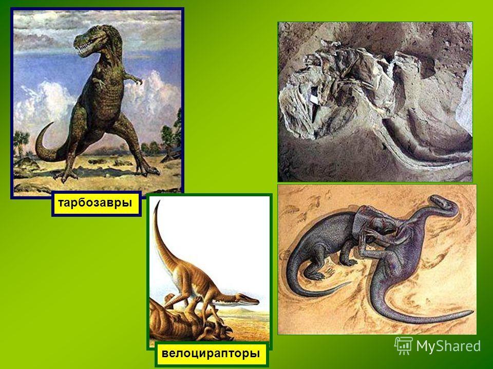 тарбозавры велоцирапторы