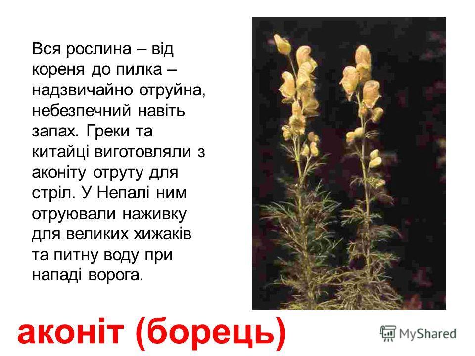 наперстянка отруйні квітки та листья