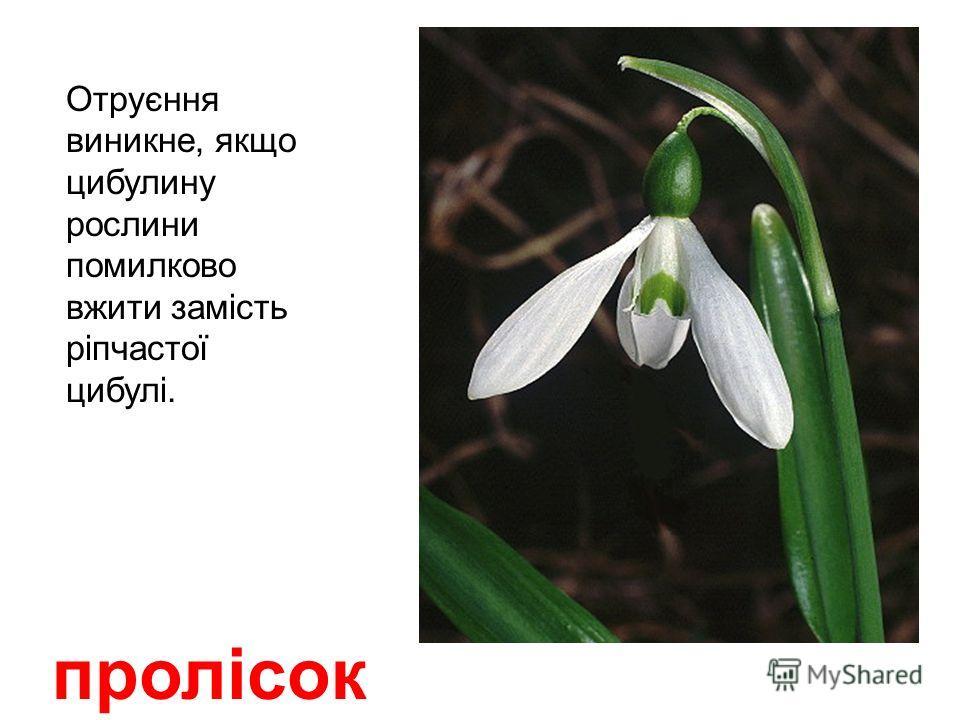 пижма ( дика горобина ) Лікарська отруйна рослина з характерным камфорным запахом.