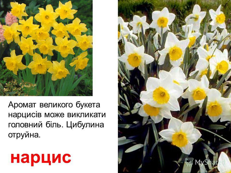 полин Лікарська отруйна рослина.