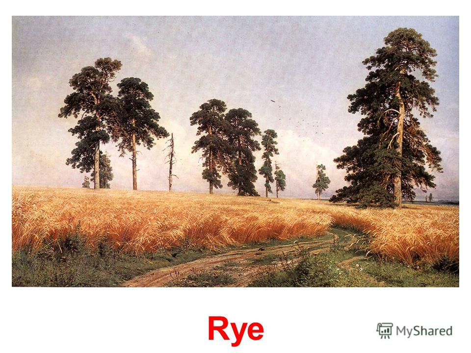 Mast-tree grove