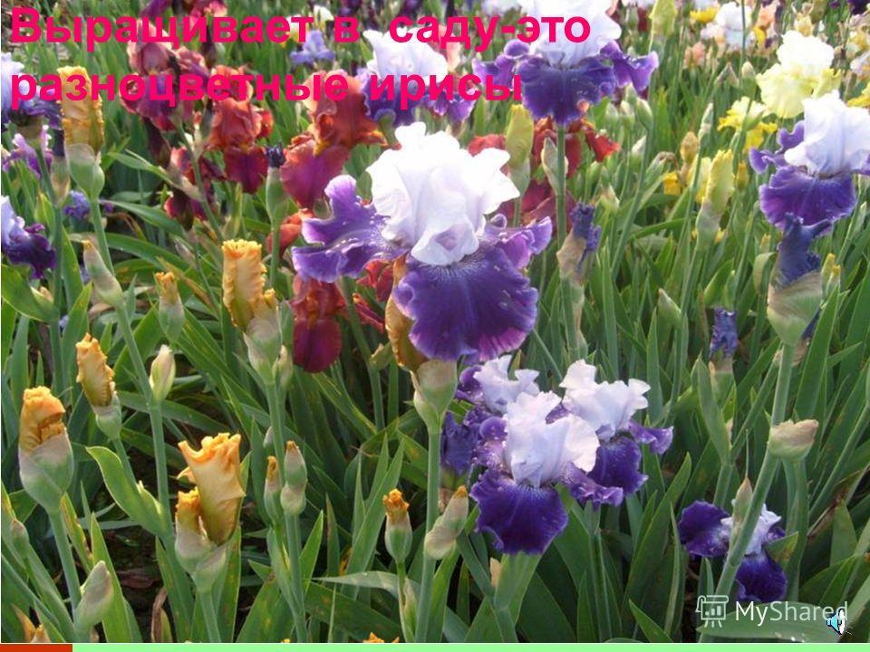 Человек выращивает цветы для красоты: