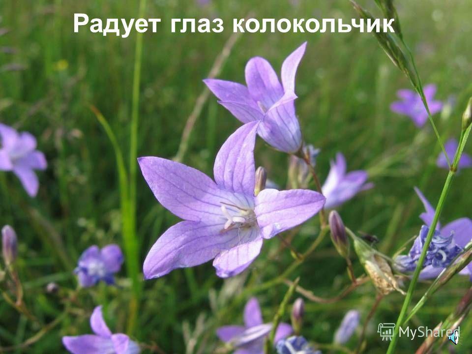 В лесу растут такие чудные цветы