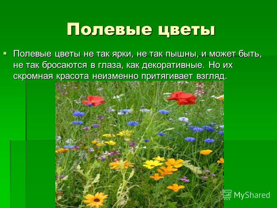 Полевые цветы Полевые цветы не так ярки, не так пышны, и может быть, не так бросаются в глаза, как декоративные. Но их скромная красота неизменно притягивает взгляд. Полевые цветы не так ярки, не так пышны, и может быть, не так бросаются в глаза, как