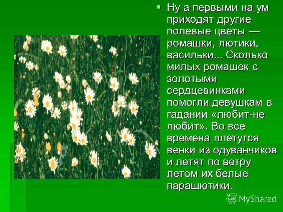 Ну а первыми на ум приходят другие полевые цветы ромашки, лютики, васильки... Сколько милых ромашек с золотыми сердцевинками помогли девушкам в гадании «любит-не любит». Во все времена плетутся венки из одуванчиков и летят по ветру летом их белые пар