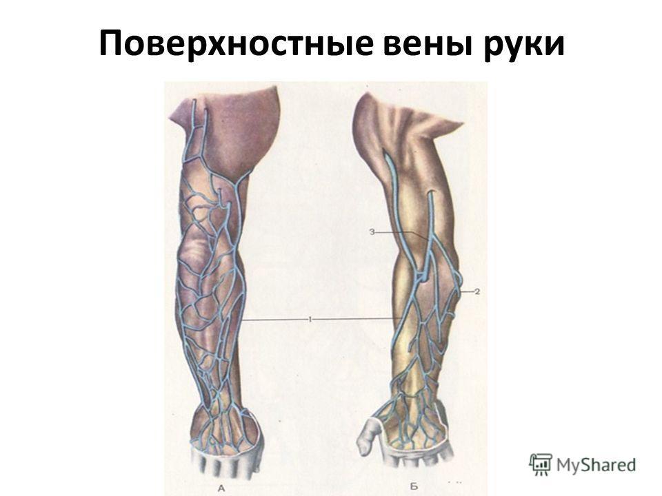 Поверхностные вены руки