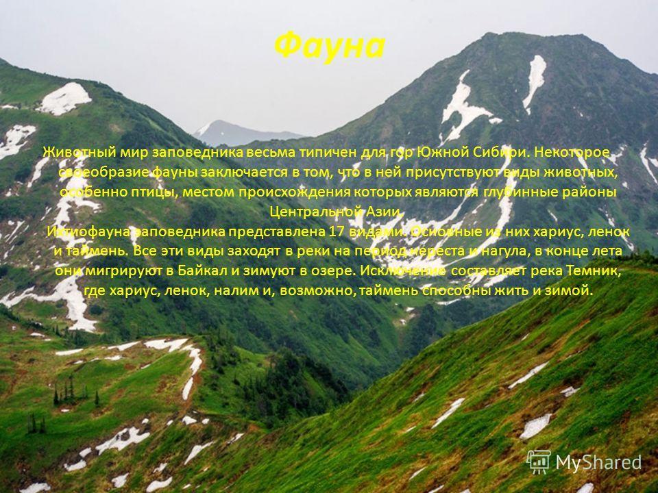 Фауна Животный мир заповедника весьма типичен для гор Южной Сибири. Некоторое своеобразие фауны заключается в том, что в ней присутствуют виды животных, особенно птицы, местом происхождения которых являются глубинные районы Центральной Азии. Ихтиофау